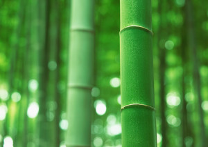 bamboo - getting back to the basics of marketing